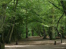Reasons to live it large in London, England. - Highgate Wood