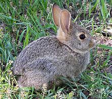 Reasons to keep rabbits as pets