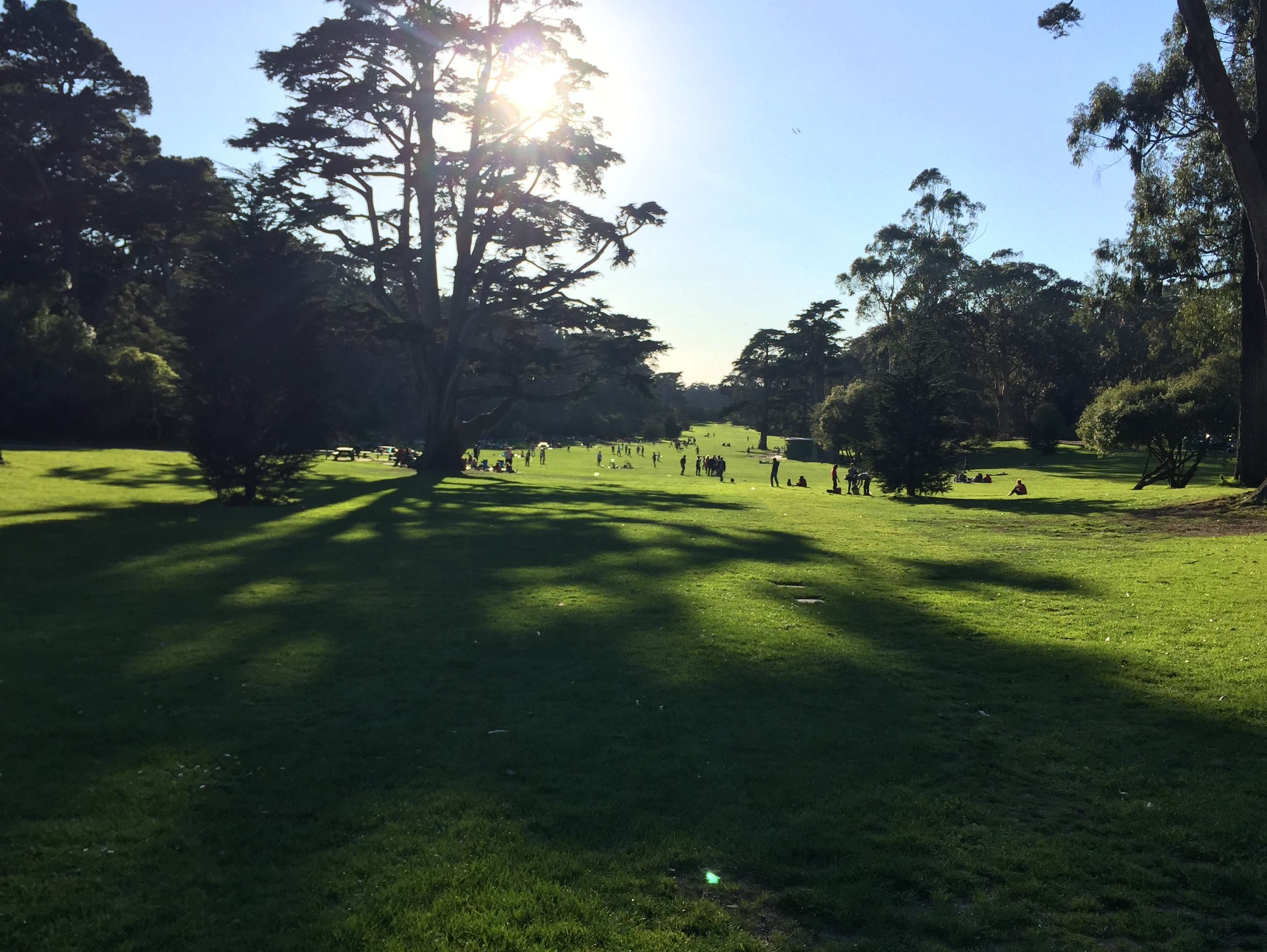 Reasons to visit San Francisco - Golden Gate Park
