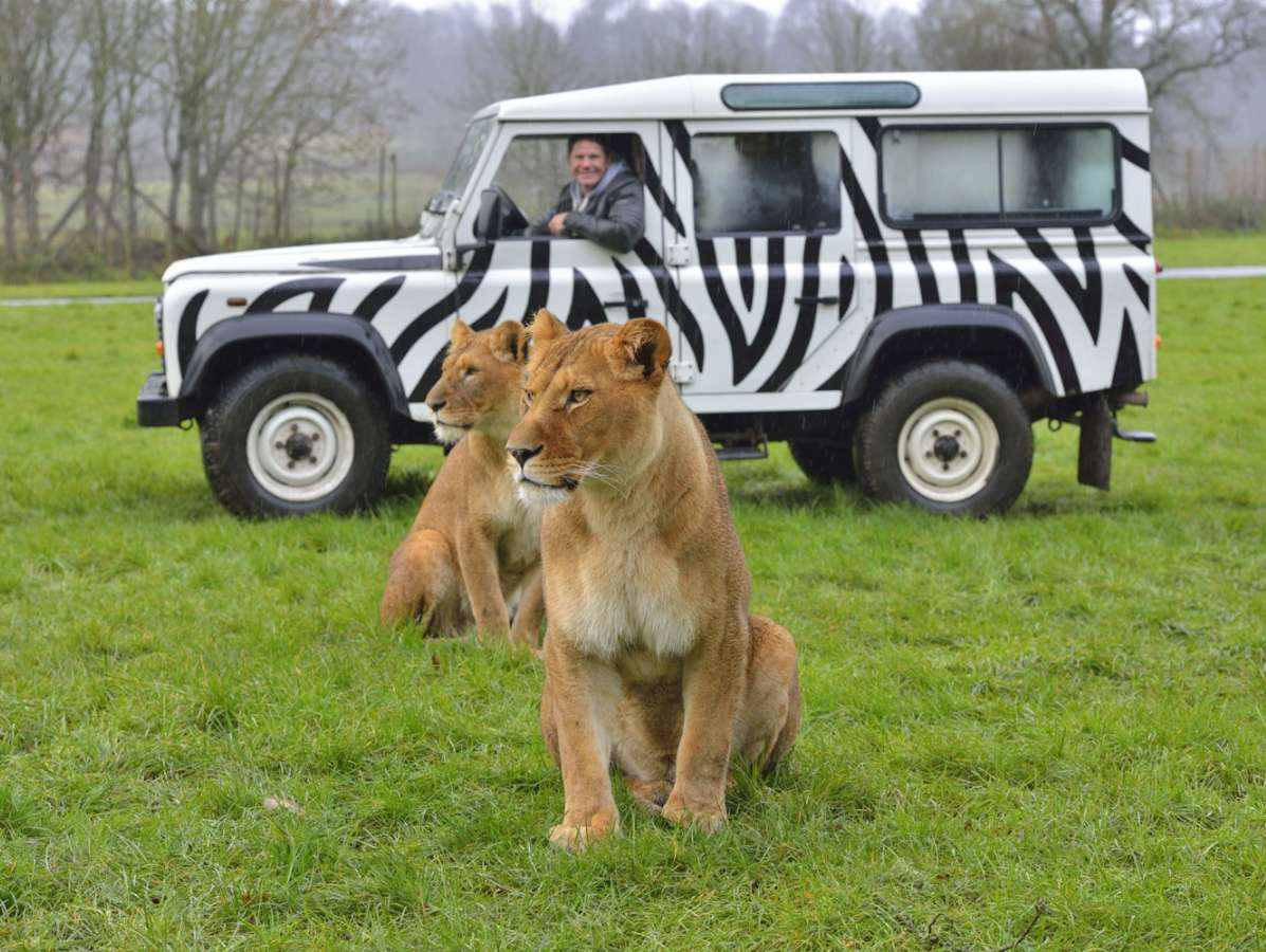 Reasons to wend your way in Wiltshire, England - Longleat Safari Park