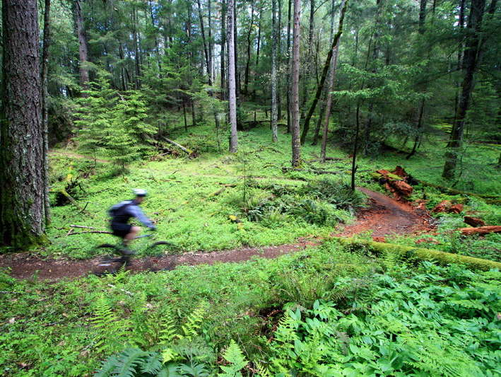 Reasons to Mountain Bike in the USA - Annadel State Park - Santa Rosa, California