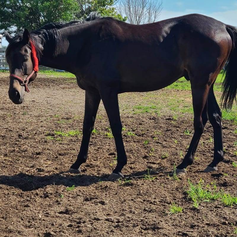 Illinois Horse Rescue's virtual fundraising Pop-Up Store