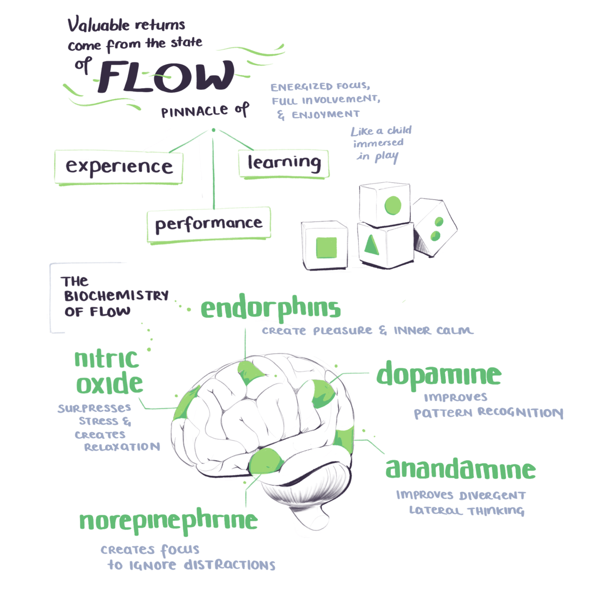 BASB sketchnotes on flow state as the pinnacle of experience, learning, and performance. As well as the biochemistry of flow state.