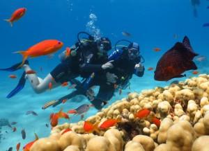 מועדון צלילה מנטה אילת (Manta)