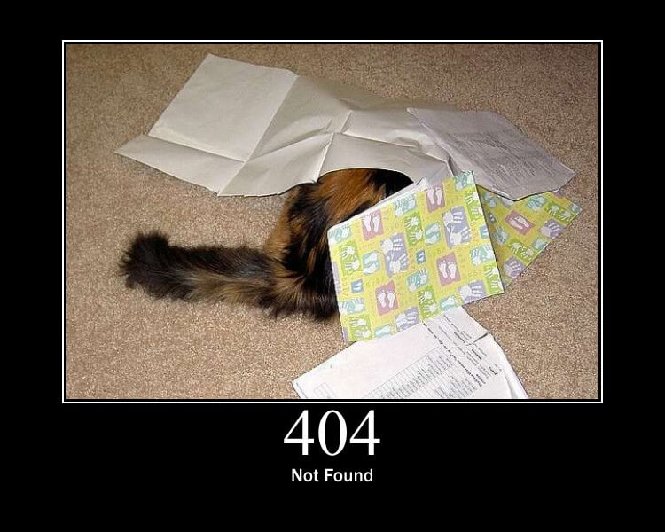 404 Cat