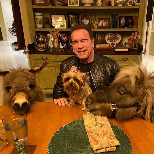 Арнольд Шварценеггер публикует смешные видео с Виски и Лулу: как животные помогают актеру