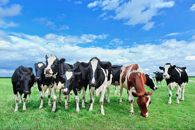 infección parasitaria en animales de granja