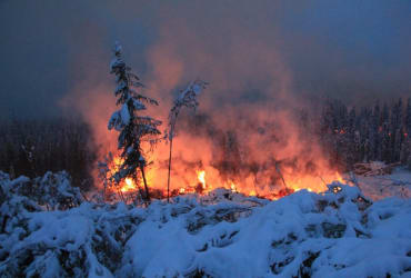 What are zombie fires, and how do they affect the environment?