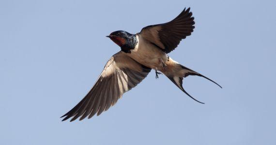 Vogelspaziergänge in Lavin