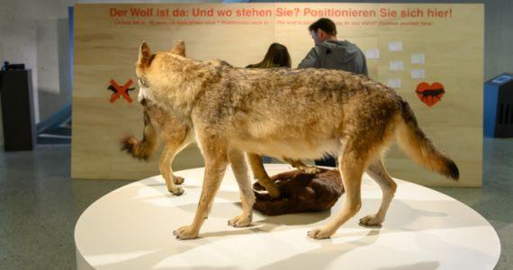Ausstellungsführung: Der Wolf ist da