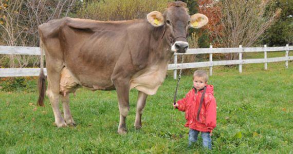 VERSCHOBEN auf 2021: Südbündner Vieh-und Warenmarkt