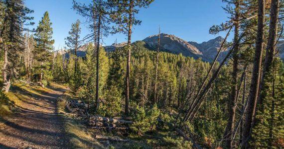 Vortrag: Wald - ein Lebensraum mit vielfältigen Ansprüchen