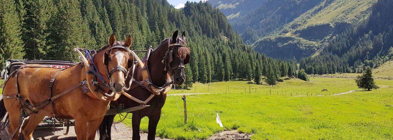 Kutschenfahrt & Besichtigung Alp Novai