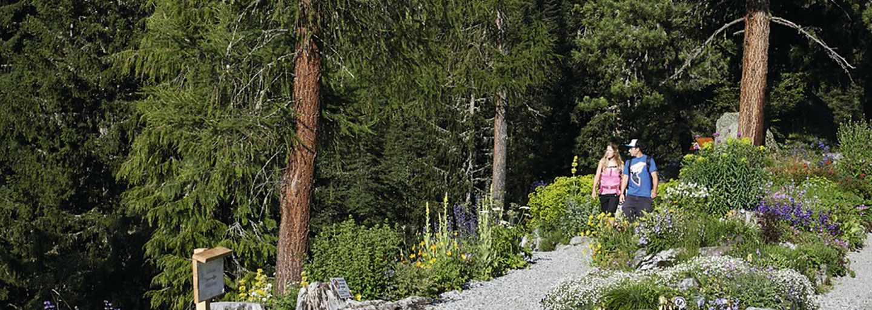 Botanical Guided Tour of the Schatzalp