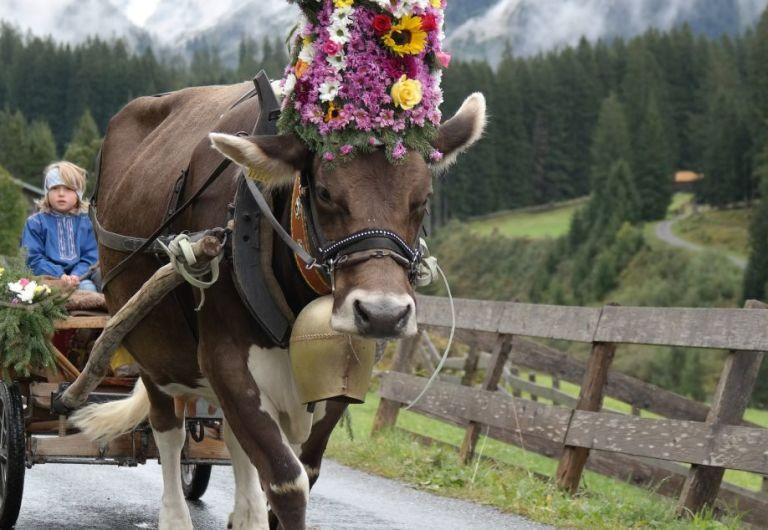 Herbsttipp: Traditioneller Alpabzug am Samstag in Klosters-Monbiel