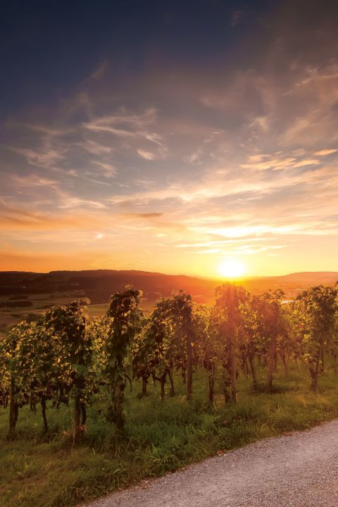 Wine Experience in Thurgau, Wellness Hotel Golfpanorama