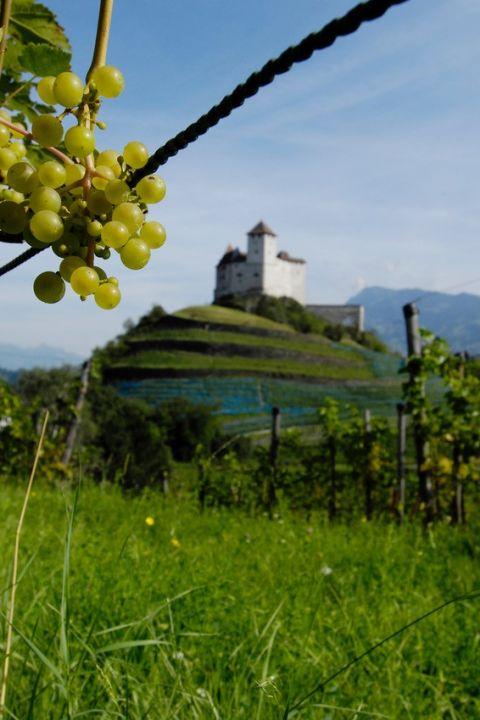 HEV - Gehen Sie mit uns auf Weinreise!