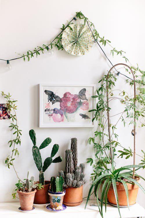 Ispirazione sud america - piante rampicanti