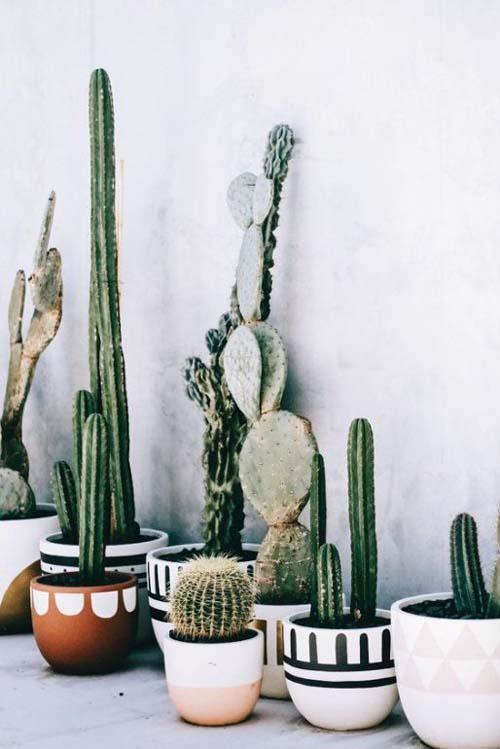 Angolo dei cactus - come coltivare i cactus