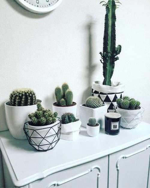 Angolo dei cactus - stile nordico