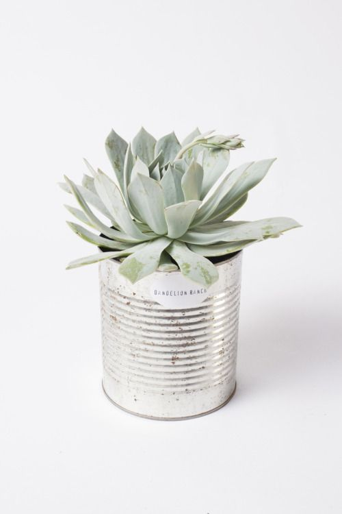 Angolo dei cactus - lattine upcycle