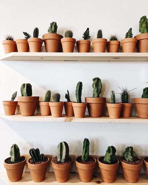 Angolo dei cactus - le talee