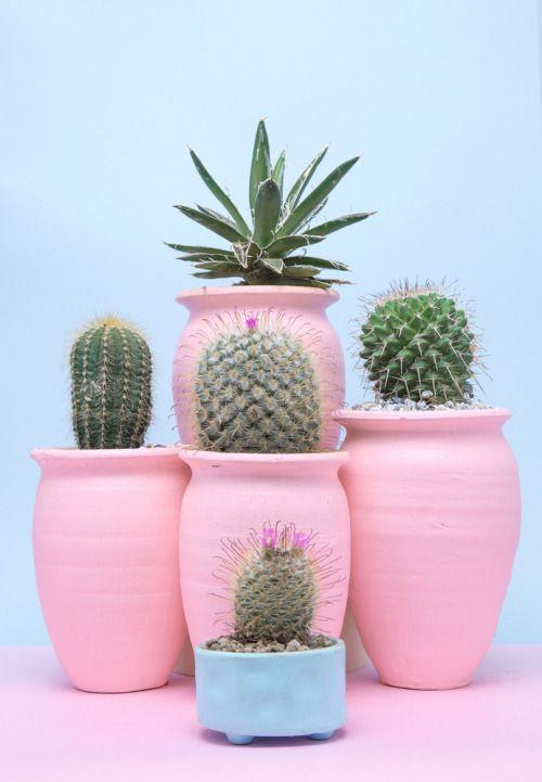 Angolo dei cactus - composizioni di cactus