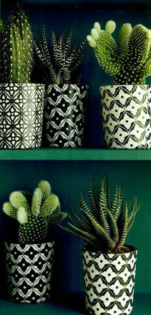 Angolo dei cactus - cactus mania