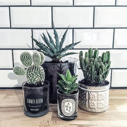 Angolo dei cactus - vecchi portacandele