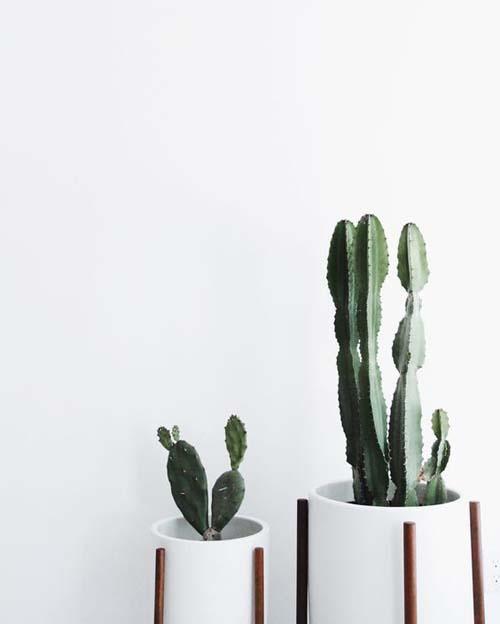Angolo dei cactus - portavasi per cactus