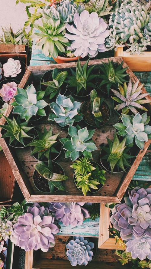 Angolo dei cactus - vassoi in legno