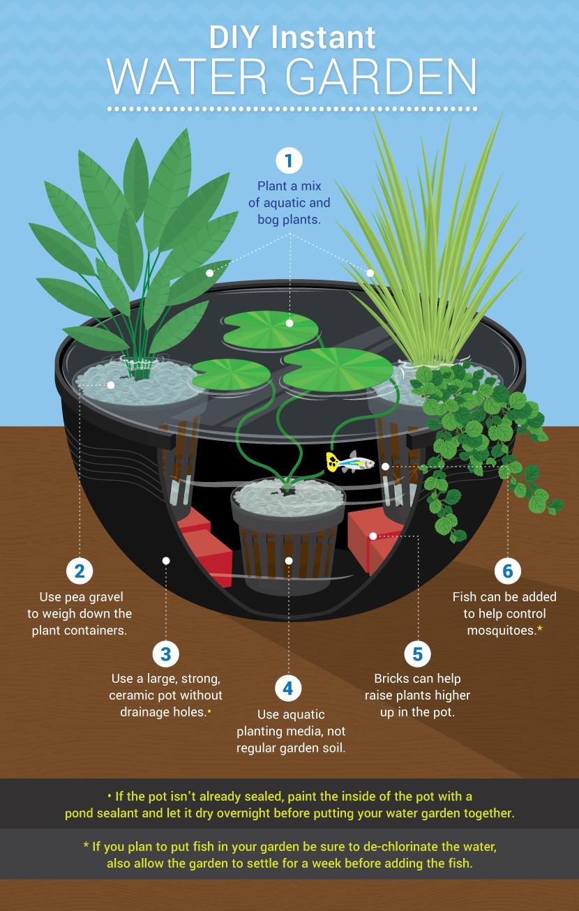 Giardini acquatici - come farlo