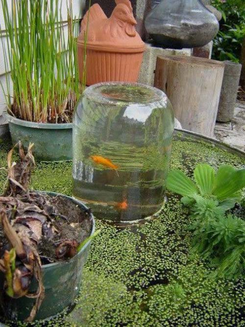 Giardini acquatici - con pesci