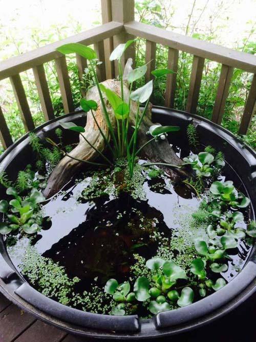 Giardini acquatici - per il terrazzo
