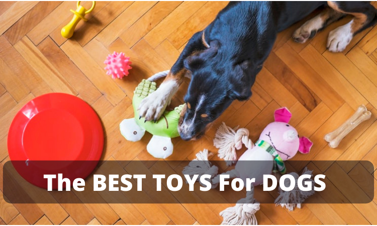 The BEST TOYS For DOGS 2021