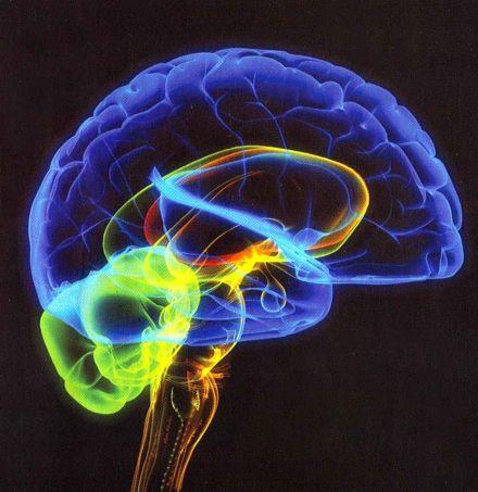 Brains - The Concept