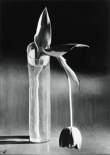 Photo d'une exposition collective de l'oeuvre de Gabriel Cualladó, intitulée Contemporary Spanish Photographers