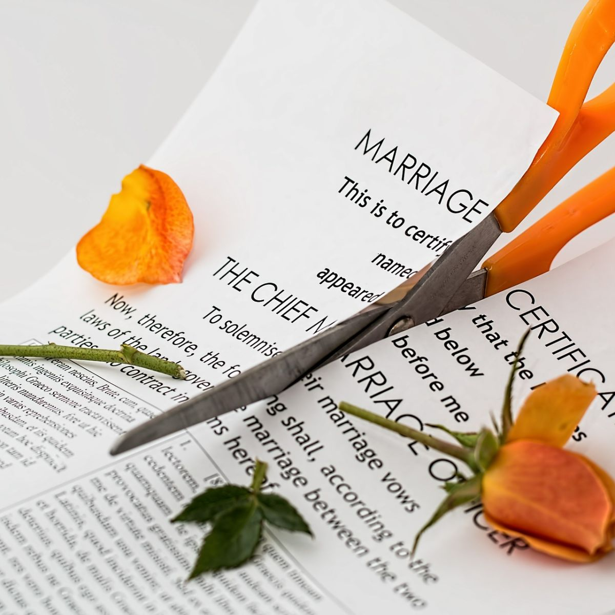 Divorce: Marriage contract cut with orange scissors, rose