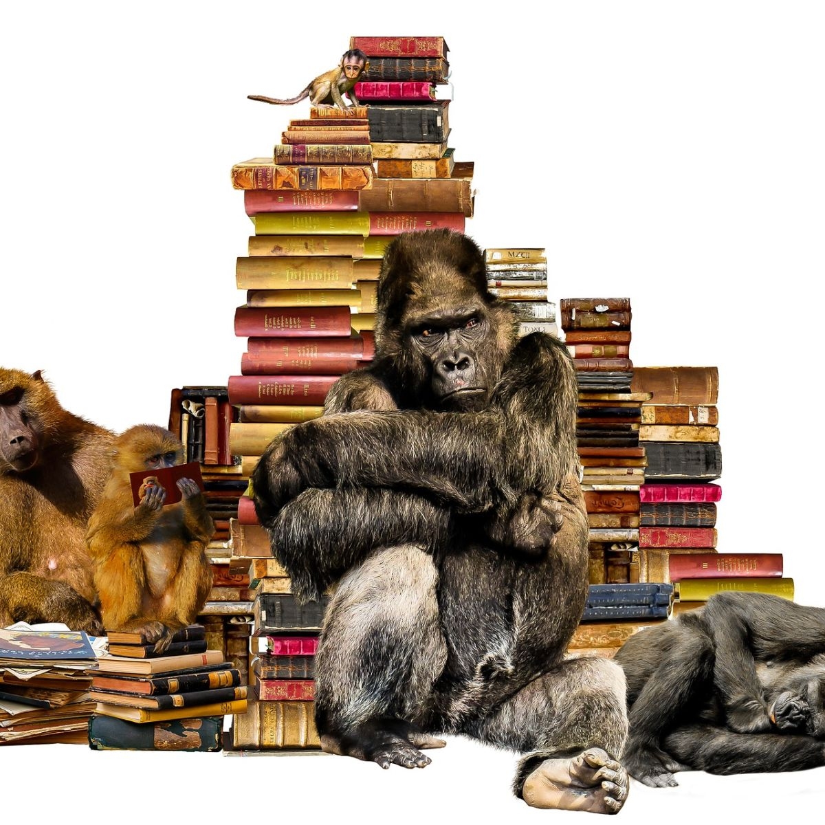 Gorilla and apes in front of books