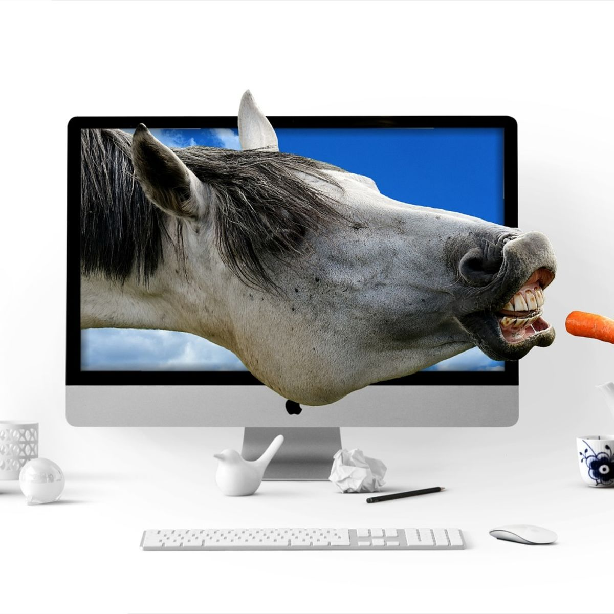 Horse in screen being fed a carrot