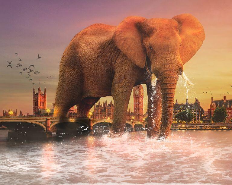 Huge elephant in river