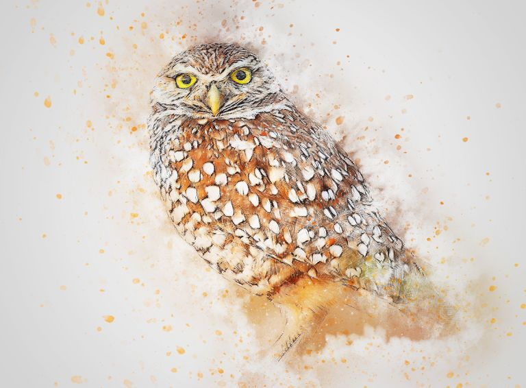 Owl drawing art