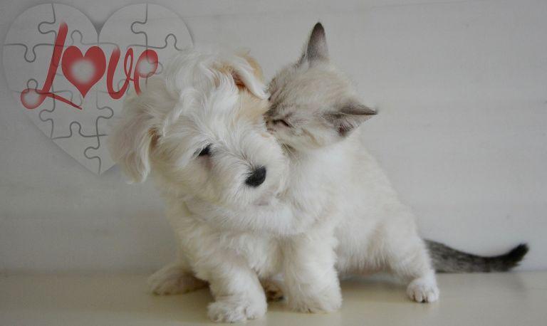 Puppy, kitten, playing, love