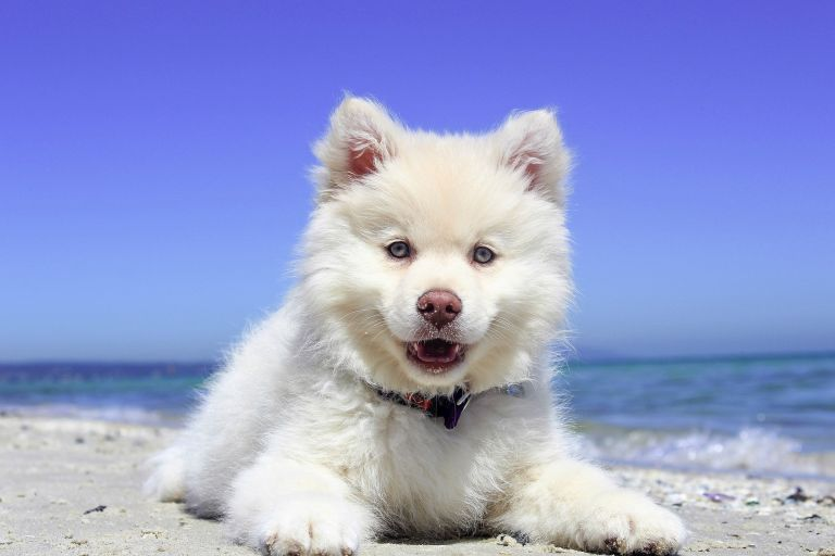 Puppy with white fur at the beach