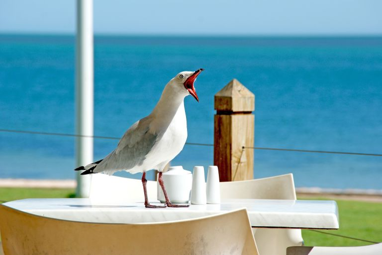 Seagull with open beak and funny face on a table in front of the sea