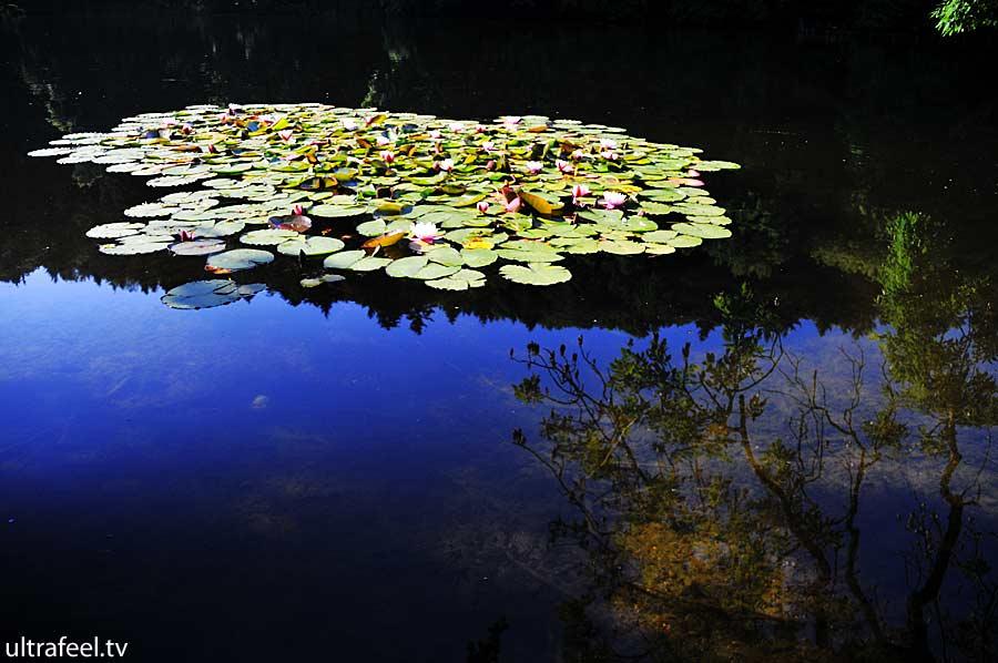 Blue pond seerosen (Ultrafeel)
