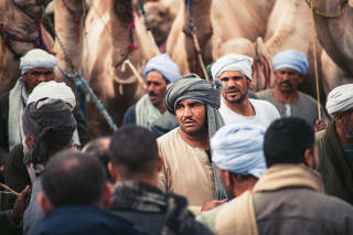 Man among camel buyers and sellers