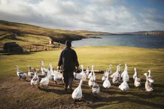 Crofter feeding geese