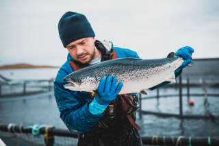 Worker holds a salmon