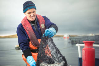 Salmon farm worker places salmon in a container of water